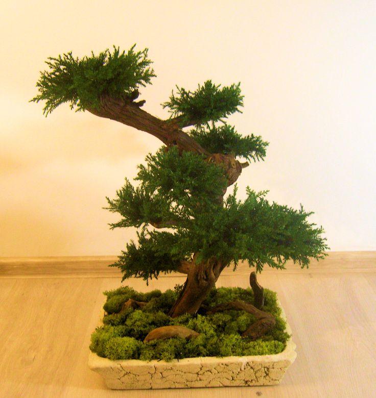 Artificial, preserved bonsai juniper tree