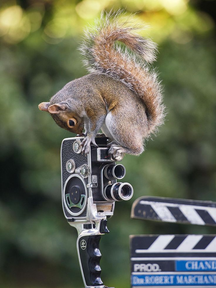 Adorable Pictures Of Curious Squirrels By British Photographer Max Ellis | Bored Panda