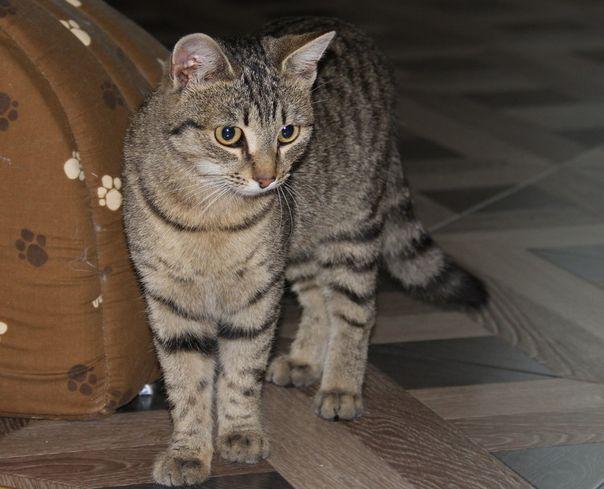 Positive cat | Animals Come