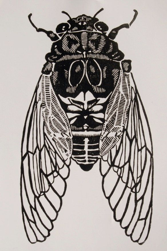 Cicada by christopherwassell on Etsy, $30.00... my dear friend & one of my favorite artists, Christopher Wassell now has his artwork for sale. I own 2 of his pieces and now you can too. http://www.etsy.com/shop/christopherwassell?ref=seller_info