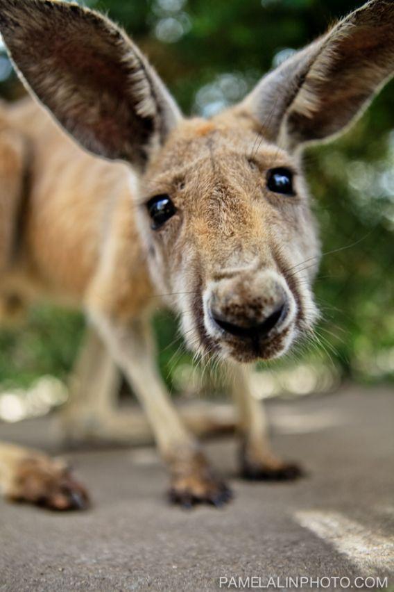 Caversham Wildlife Park - Pamelalinphoto-8