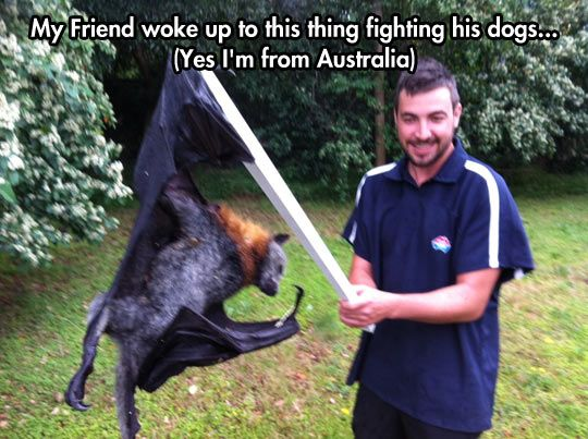 """I love how chill this guy is. """"Yeah, another demon bat from hell tried to eat our dogs -- no biggie!"""""""