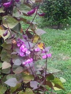 A kertbarátok legszebb növénye