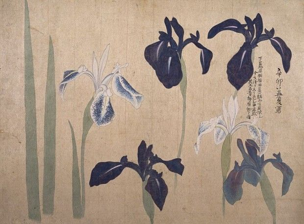 ARTIST: Maruyama Ōkyo (1733 – 1795) Edo period, 1793 TYPE: ink and light color on paper Irises