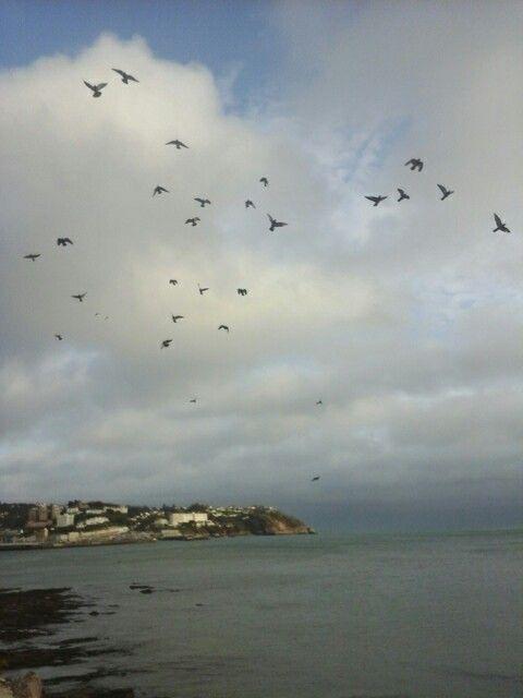 Birds in flight, taken by Amanda 31st January Sunday.