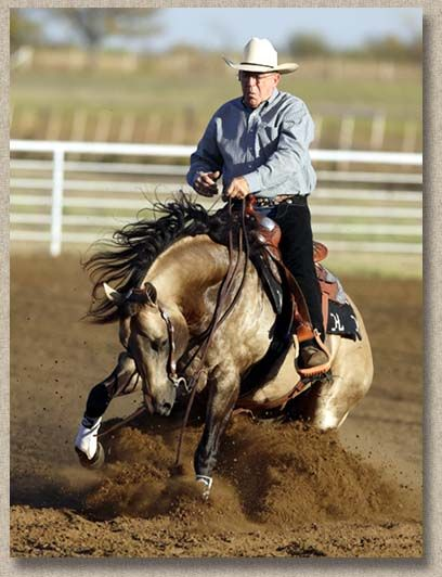Hard and very good stop by this reining horse - Who Whiz It is a tremendous young stallion with a great mind,