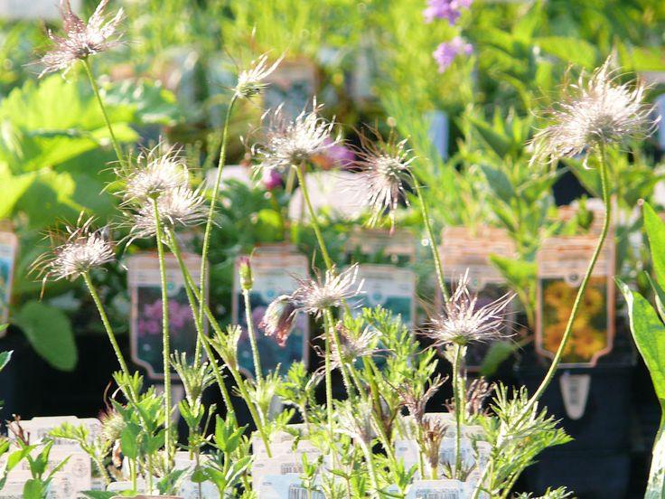 Pflanzenversand von Grabbepflanzungssets