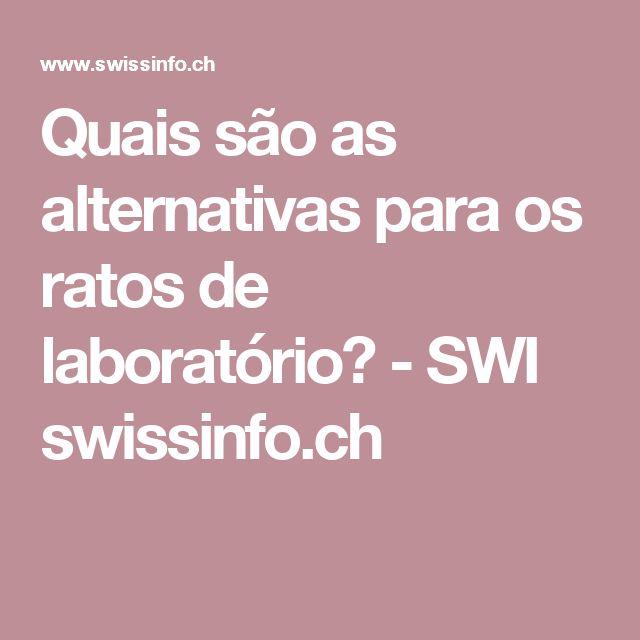 Quais são as alternativas para os ratos de laboratório? - SWI swissinfo.ch