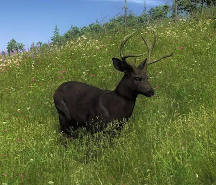 Image result for melanin on deer