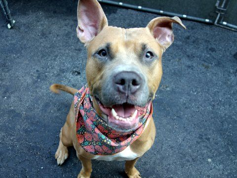BROOKLYN A1055187 Manhattan TO BE DESTROYED 10/29/15