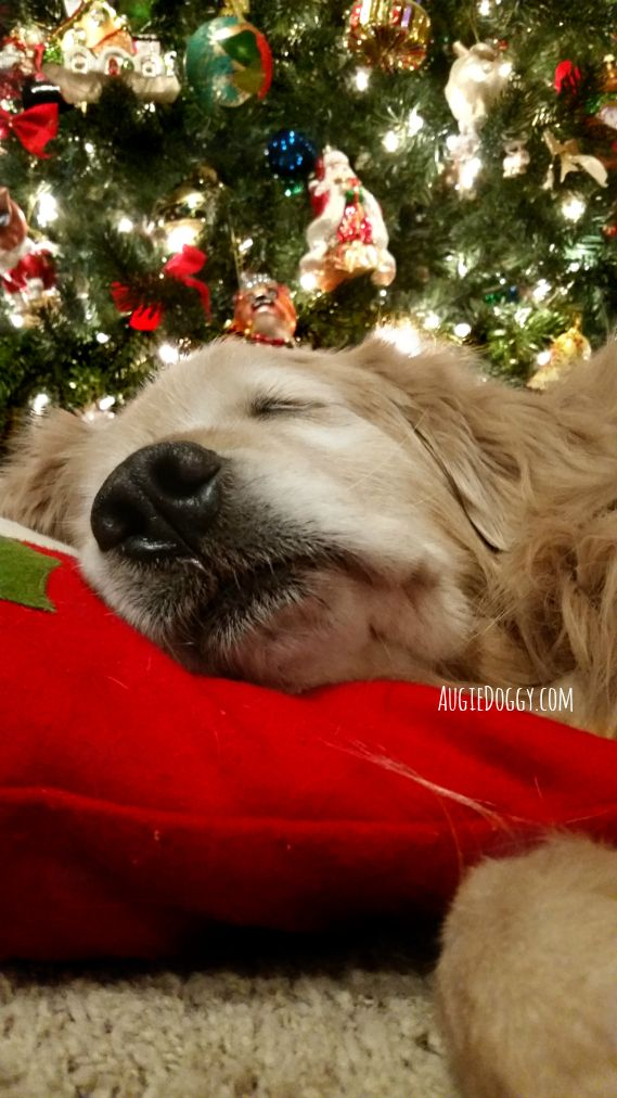 May all your Christmas dreams come true...