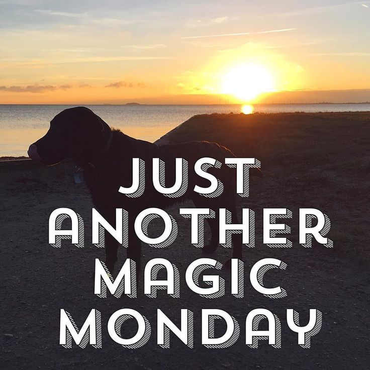 """""""Just another magic Monday""""  Are you a #businessninja yet? Take your business to the next level! Get your FREE GIFT - see link in the bio.  Follow @lisegottlieb #quote #puppy  #labrador  #inspiration #quoteoftheday #business #businessman #businesswoman #motivation #entrepreneur #lifestyle #entrepreneurs #success #hardwork #entrepreneurship #businessowner #work #startup #money #inspiredaily #successful #startuplife #happiness #entrepreneurlife #desire #working #passion…"""