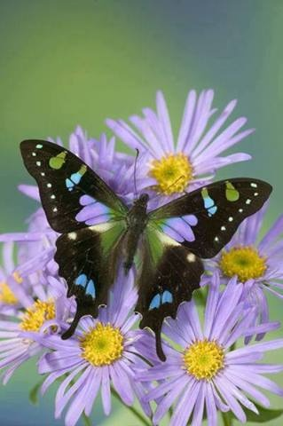 Beautiful Magickal colorful butterflies on flowers