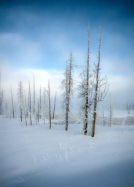 Yellowstone - peaceful and quiet . . . the trees . . like sentinels stand . . . . No noise . . . . utter quiet . . . . . . a world at peace !                                             S.M.