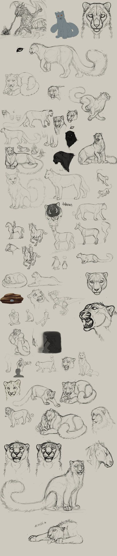 Best 50 Ideas Varias Images On Pinterest Animal Drawings Tattoo Bald Eagle Anatomy Diagram Http Catherinecabrolcom 9 Baldeagle Trying To Shake Off All The Rust Thats Come With My Long Non Drawing Phase Im Sometimes Still Struggeling Feline Especially Hind Legs H
