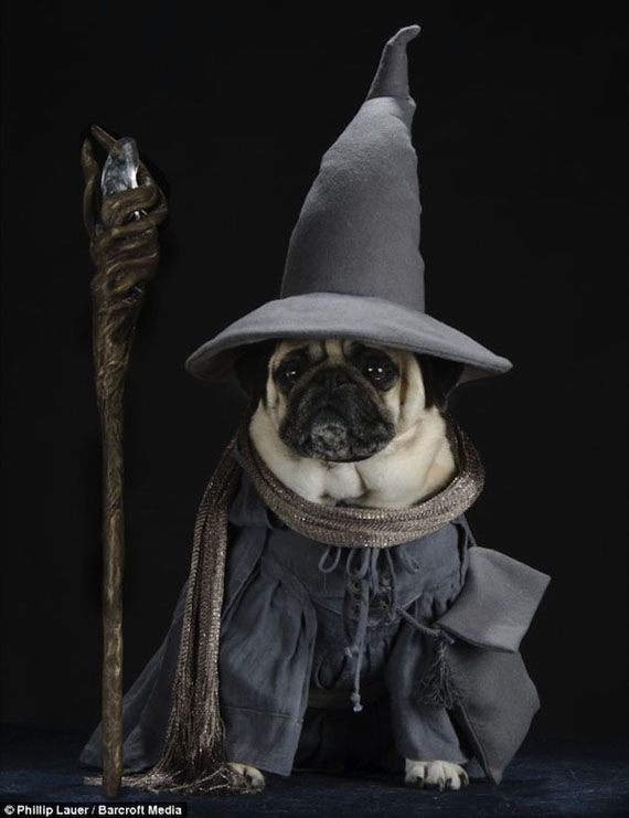 Pugs Dressed Up As LOTR Characters @Cassidy Williams you're welcome :)