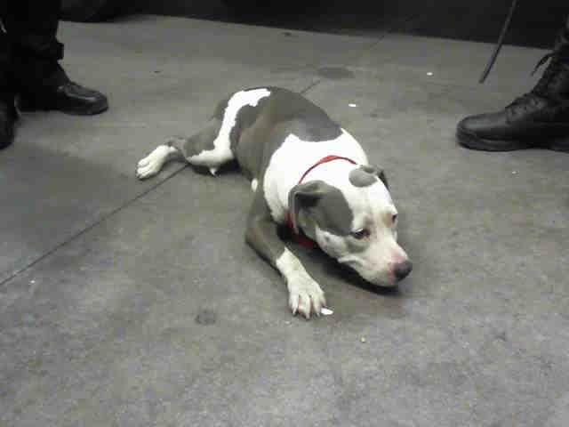 Www Petharbor Com Animal Search Adoptable Animal Shelter