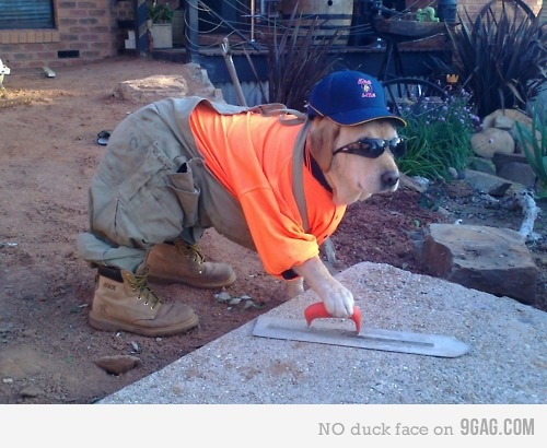 this is borderline wrong but so funny!Work Hard, Laugh, Funny Dogs, Funny Pictures, Funny Stuff, Humor, Funny Animal, Funnystuff, Work Dogs