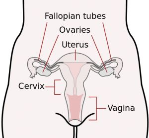 generic of viagra