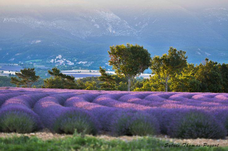 Concours Photo 2015 Aix-Marseille-Provence - Cette photo fait partie du palmarès du concours !