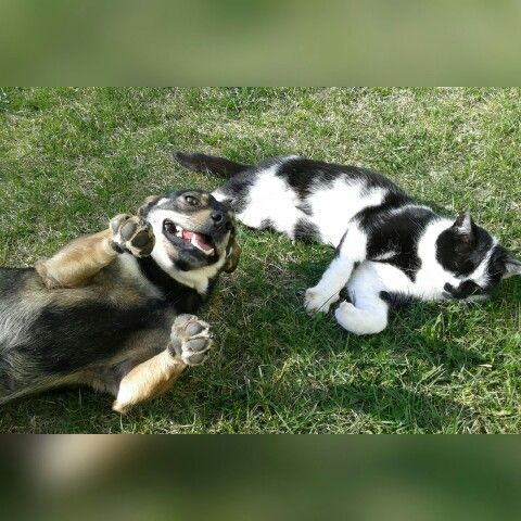 #dogwithkitty #happydog #angrykitty