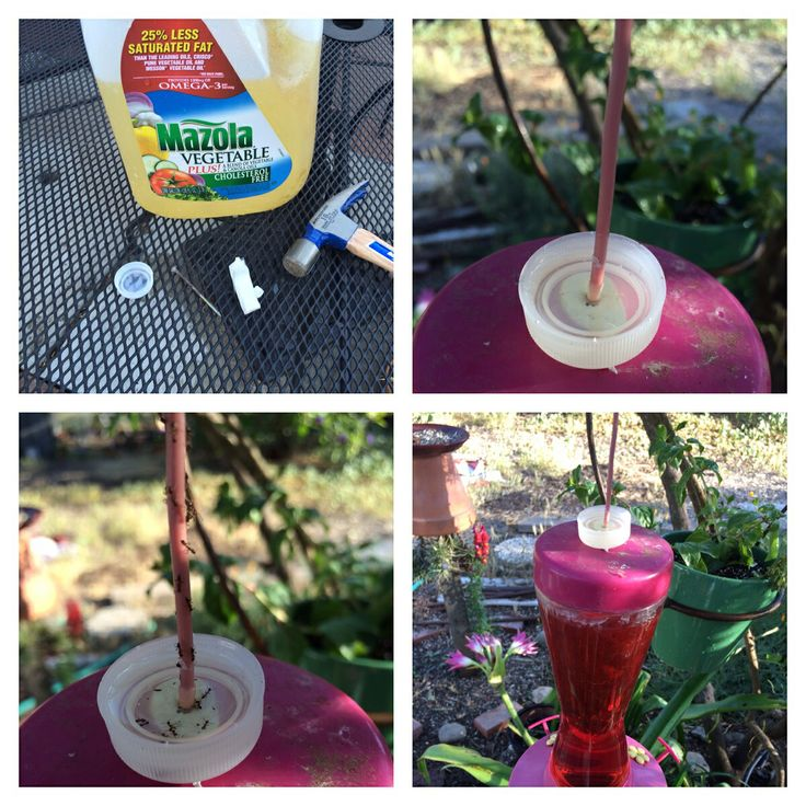 how to keep ants out of your hummingbird feeder without poisons 1 take the lid of a water. Black Bedroom Furniture Sets. Home Design Ideas
