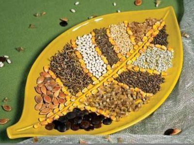 Семена овощных культур: сроки хранения и посева, условия проращивания семян