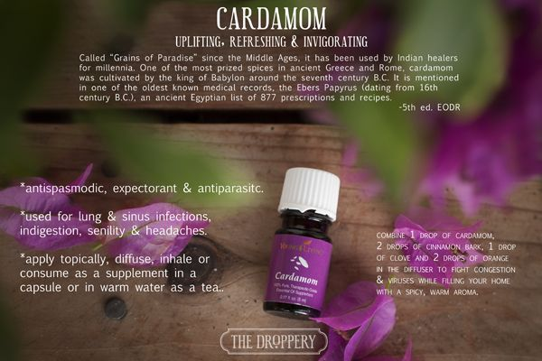 Young Living Cardamom Essential Oil | www.thedroppery.com