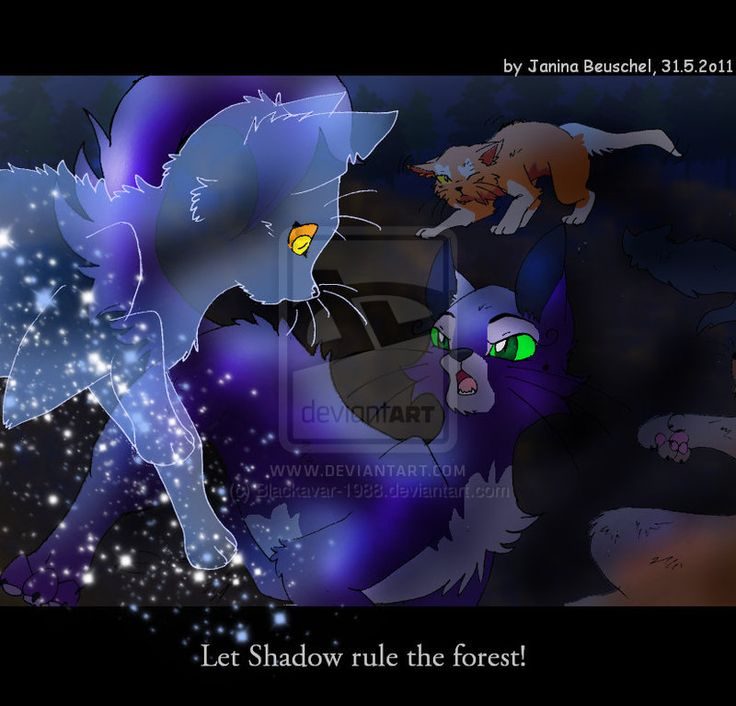 Warriors Forest Of Secrets Lexile: 858 Best Images About Warrior Cats On Pinterest