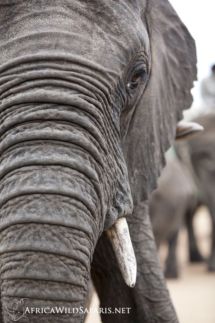 Mejores 71 imágenes de Elephants en Pinterest | Elefantes, Animales ...