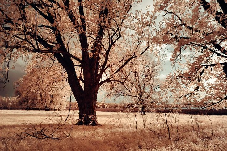 Google Image Result for http://smashingtips.com/wp-content/uploads/2010/12/dream-summer-infrared-photography1.jpg: Nature, Dreams, Secret Places, Colors, Infrar Photography, Cherries Blossoms Trees, Art Beautiful, Summer Photography, Natural Sweet