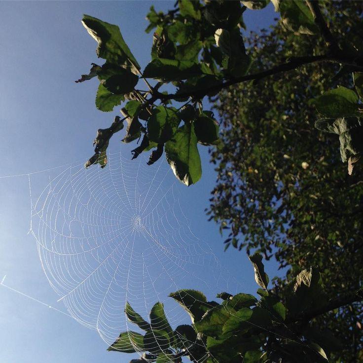 Smukt spind i æwletræet - smuk efterårsmorgen