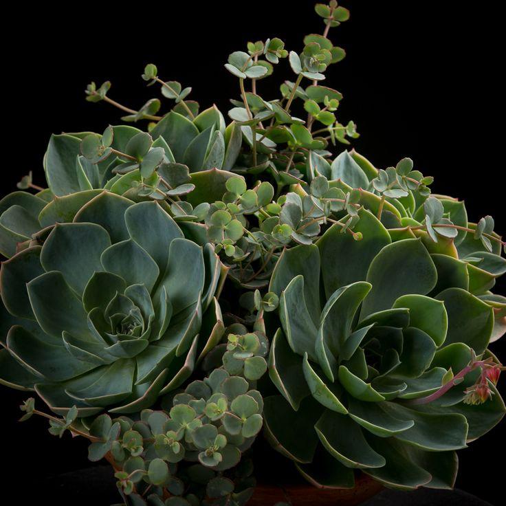 25 beste idee n over tuinplanten op pinterest kamerplanten kamerplanten en - Moderne pflanzschalen ...