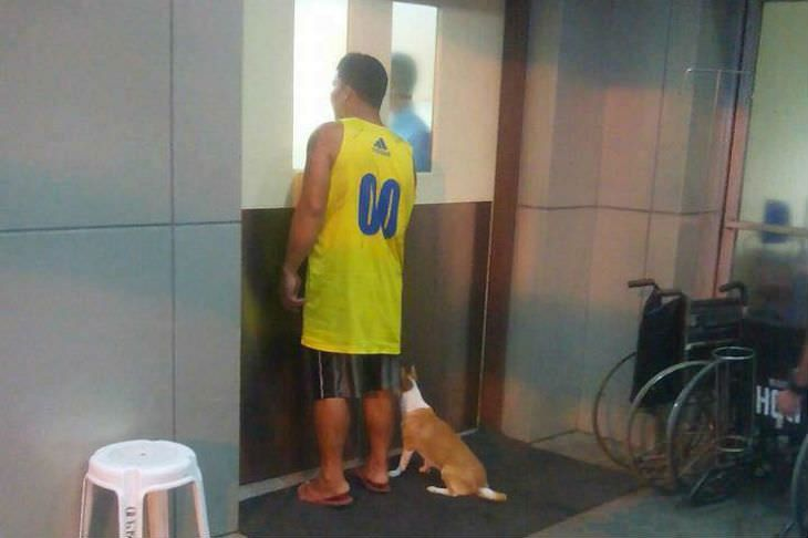 Même dans la mort, un chien fidèle reste aux côtés de son maître.