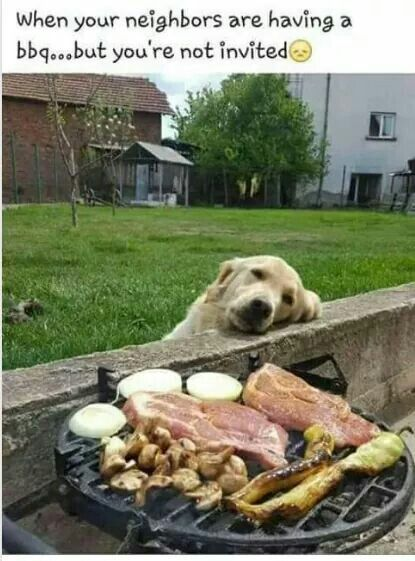 Golden Retriever wishing he had been invited to the Bar B Que.