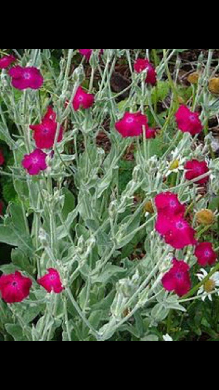 "84 best ""music school:"" baroque images on pinterest | plants"