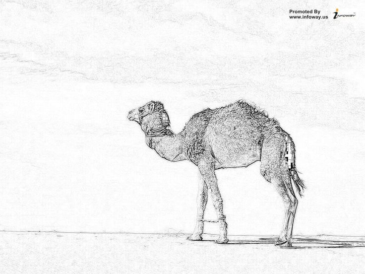 125 best Pencil Sketch Natural Beauty images on Pinterest ...