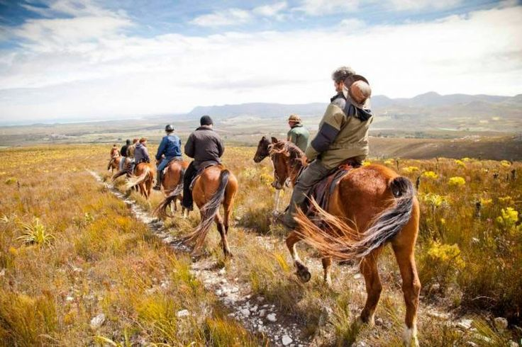 African Horse Company | Love Overberg