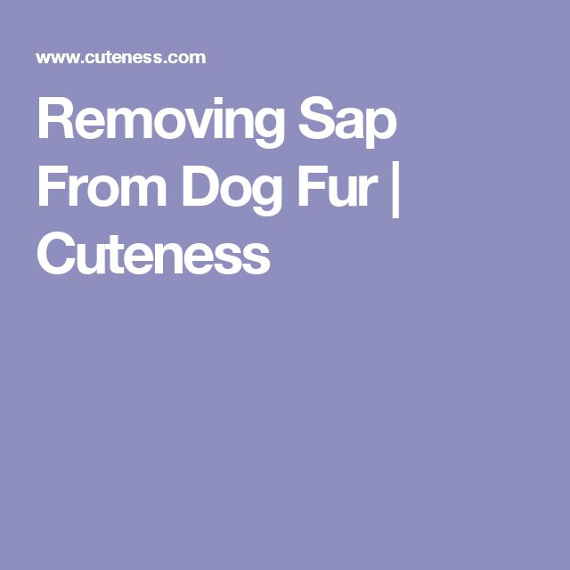 Removing Sap From Dog Fur | Cuteness