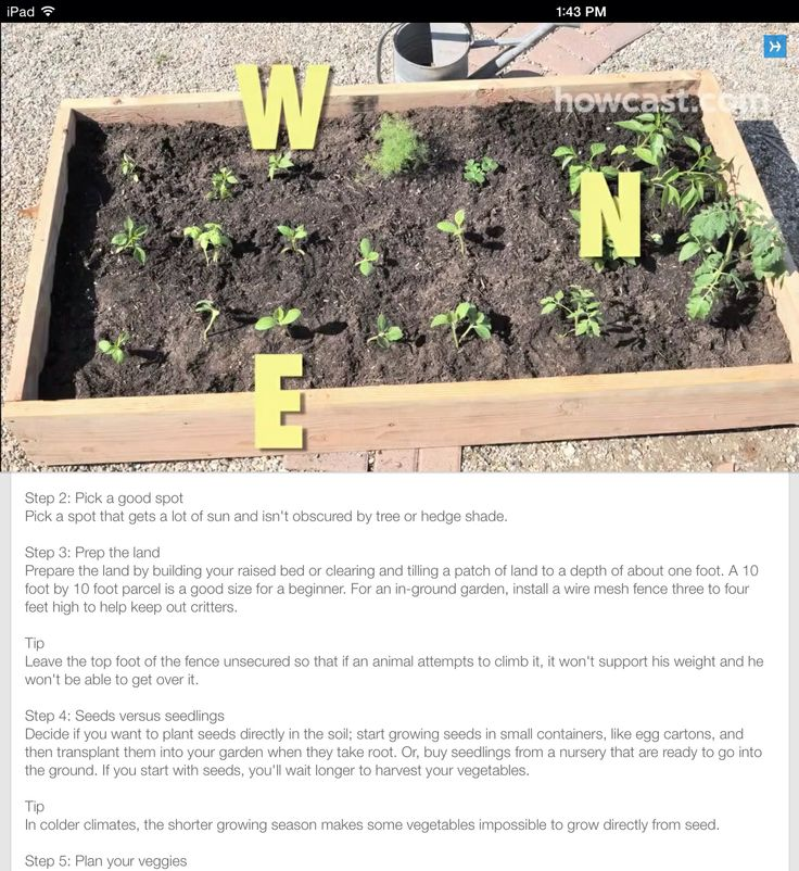 What to plant WHERE in your garden. | Gardening | Pinterest | Plants ...