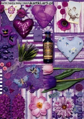Very Violet kompozycja i fotografia Andrea Tilk