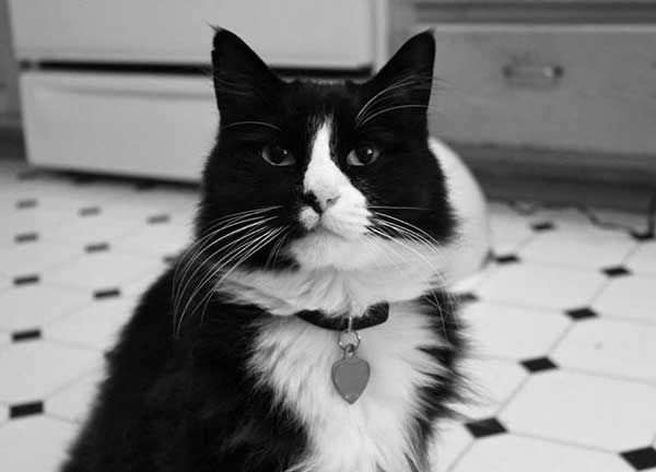 We Talk to Henri Le Chat Noir About Hollywood, Caturdays, and Dogs   Catster
