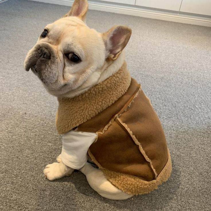 French Bulldog Shepherd Vest in 2020 (With images