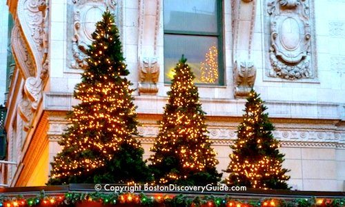 Holiday trees in downtown Boston