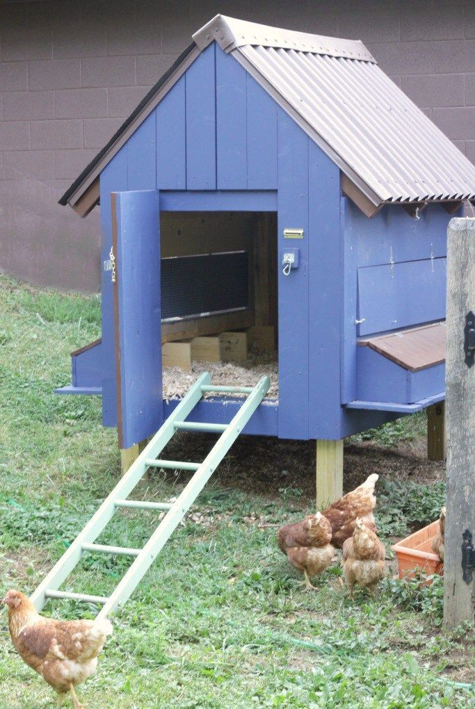 Hannah Montana Chicken Coop V Wants Her Playhouse Painted Something Like This Fun Chickens Backyard Coop Chicken Coop