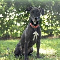 Available Pets At Lake County Animal Shelter In Tavares Florida Animal Shelter Pets Pet