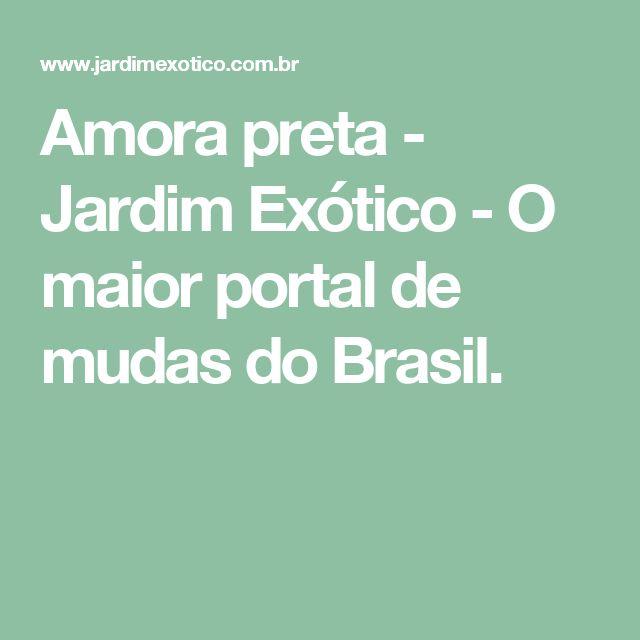 Amora preta - Jardim Exótico - O maior portal de mudas do Brasil.