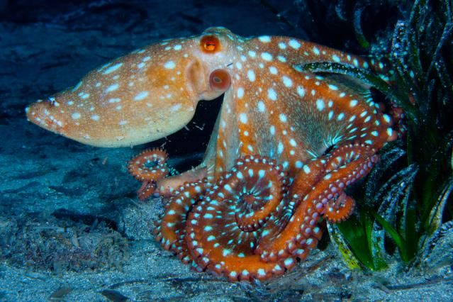 11 Facts About Octopuses