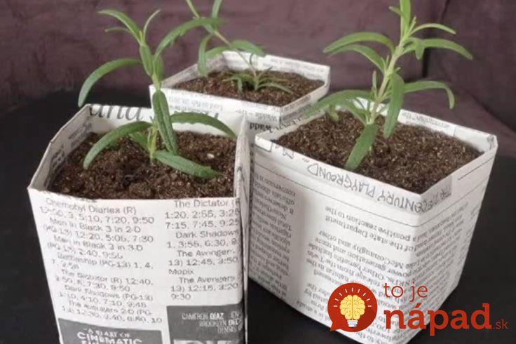 Najlacnejšie črepníky na sadenice, ktoré môžete zasadiť priamo do pôdy