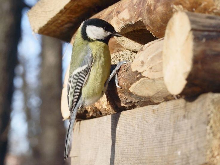 Vogels horen bij de tuin, in elk seizoen. Met hun uitbundig gezang kondigen ze de lente aan. In de zomer en het najaar wippen ze aan voor besjes, zaden en insecten. En in de winter doen ze een beroep op onze hulp. Met deze tips help je ze veilig door de soms moeilijke winterperiode…
